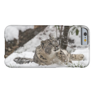 Curious Snow Leopard in Snow Barely There iPhone 6 Case