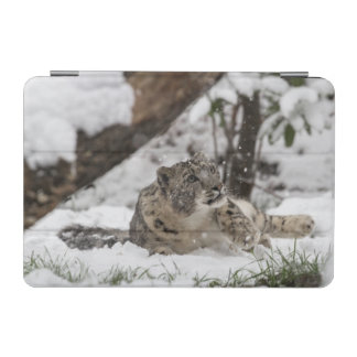Curious Snow Leopard in Snow iPad Mini Cover