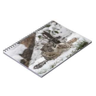 Curious Snow Leopard in Snow Notebook