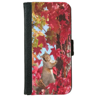 Curious squirrel in autumn tree iPhone 6 wallet case