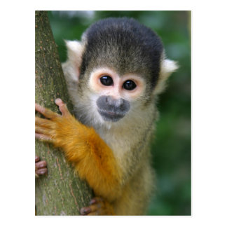 Curious squirrel monkey postcard