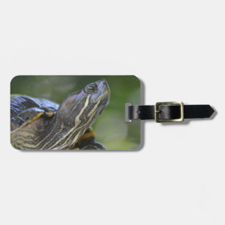 Curious Turtle Luggage Tag