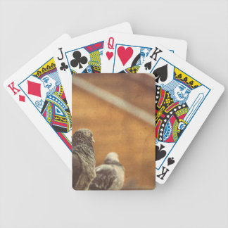 Curious Urban Pigeons Retro 4 Poker Deck