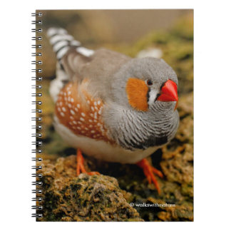 Curious Zebra Finch on the Rocks Notebook
