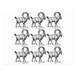 curl horn ibex postcard