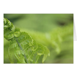 Curling Fern Leaves, Greenery, Blurred Background Card
