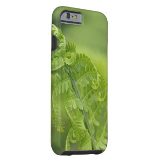 Curling Fern Leaves, Greenery, Blurred Background Tough iPhone 6 Case