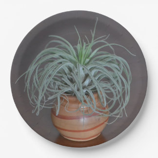 Curly Air Plant Paper Plate
