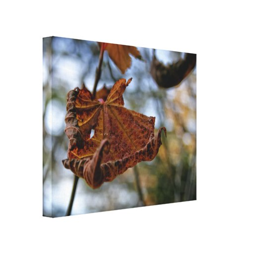 Curly Autumn Leaf Stretched Canvas Print