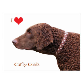Curly Coated Retriever dog I love heart postcard