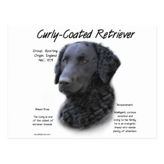 Curly-Coated Retriever History Design Postcard