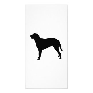 Curly Coated Retriever hunting dog Silhouette Photo Greeting Card