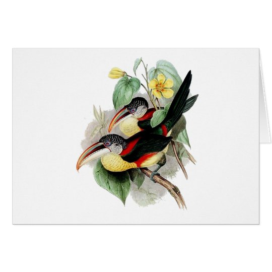 Curly-crested Aracari Card