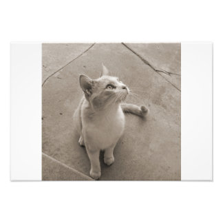 Currious cat photo print