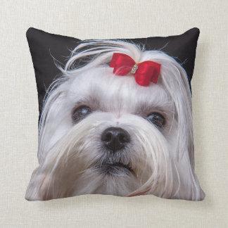 Cushion of maltese dog small white toy dog