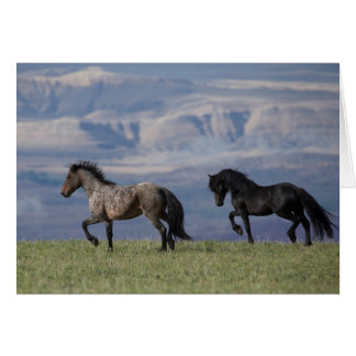Custer and Galaxy - Wild Horse Greeting Card