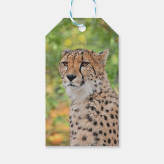 Custom Gift Tags with cheetah face portrait