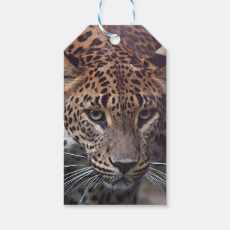 Custom Gift Tags with Persian lepard