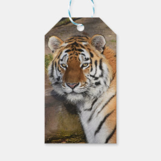 Custom Gift Tags with tiger face portrait