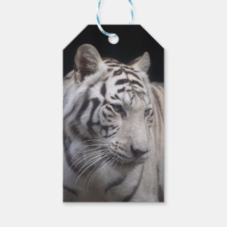 Custom Gift Tags with white tiger face portrait