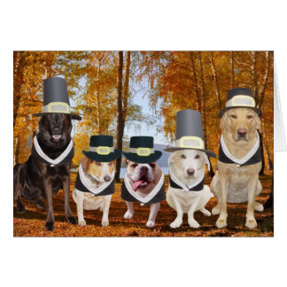 Customisable Funny Dog Pilgrims Thanksgiving Card