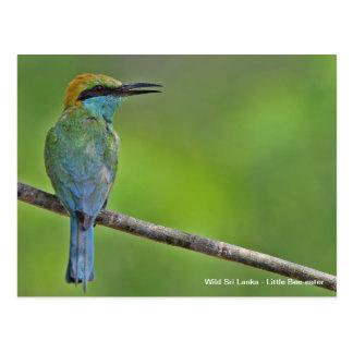 Customisable Little Bee-eater Postcard