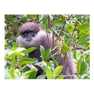 Customisable Purple-faced Leaf Monkey Postcard