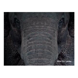 Customisable Sri Lanka Elephant Postcard