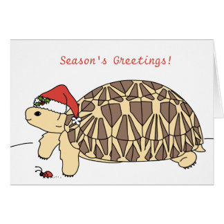 Customisable Star Tortoise Christmas Card