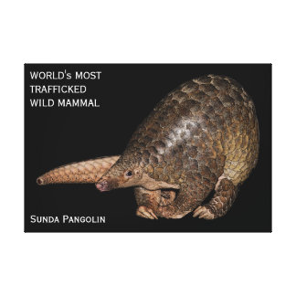 Customisable Sunda Pangolin Canvas Print