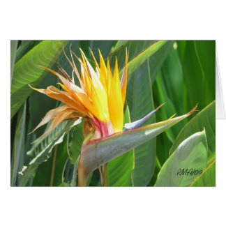 Customizable Bird of Paradise Card