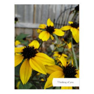 Customizable Black Eyed Susan Garden Postcard
