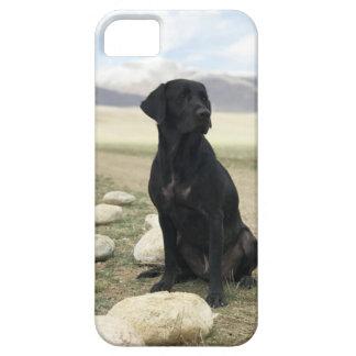 Customizable Black Labrador Retriever Case For The iPhone 5