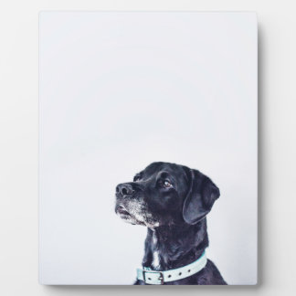 Customizable Black Labrador Retriever Plaque