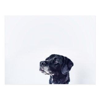 Customizable Black Labrador Retriever Postcard