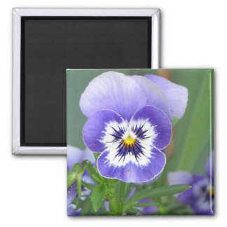Customizable Blue Pansy Face Magnets