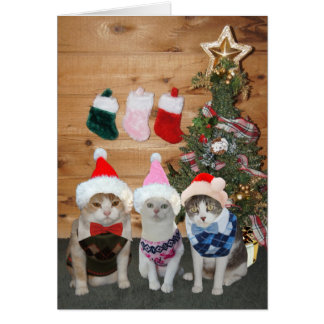 Customizable Christmas Cats/Kitties Argyle Sweater Greeting Card
