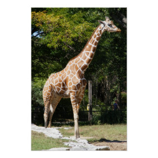 Customizable Giraffe Poster