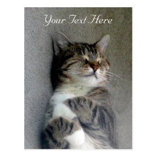Customizable Happy Cat Post Card