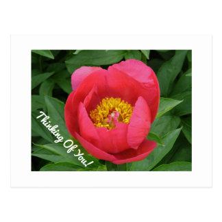 customizable postcard/ Thinking Of You/ Pink Peony Postcard
