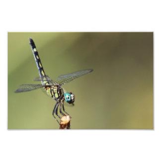 Customizable Print, Dragonfly with Vortex Eyes Photo Print