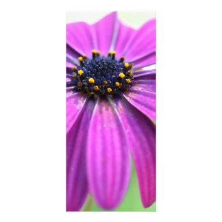 Customizable Purple Daisy Rack Card Design