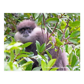 Customizable Purple-faced Leaf Monkey Postcard