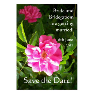 Customizable Save the Date Card, Bright Pink Roses Pack Of Chubby Business Cards