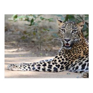 Customizable Sri Lanka Leopard Postcard