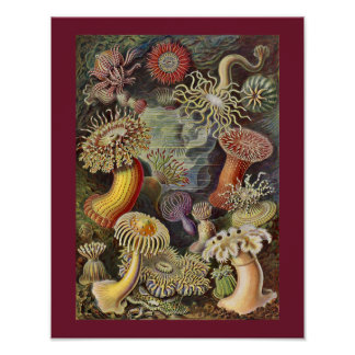 Customize Ernst Haeckel Sea Anemones Art Print