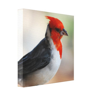 Customize Product Canvas Prints