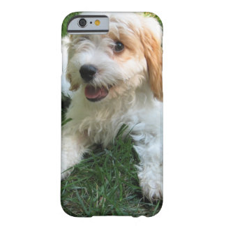 Customized Cavachon Photo Phone Case, Dog Barely There iPhone 6 Case