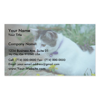 Cut Cat Sitting On The Stone Business Card