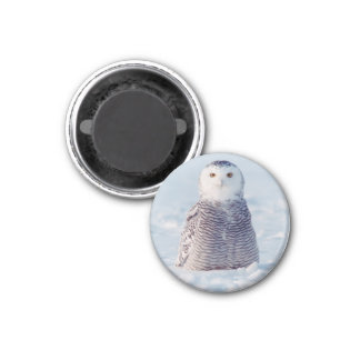 Cute Alaska Arctic Snowy Owl Photo 3 Cm Round Magnet